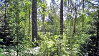 Lövträdsrika öar blir naturreservatet Krokstadön