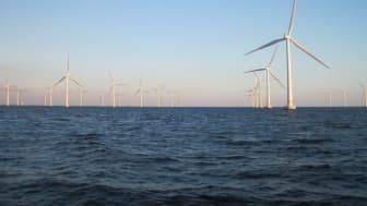 """HaV-yttranden om vindkraft till havs: """"Vill ha ny prövning för Stora Middelgrund"""