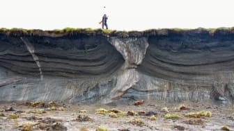 Iskilar på Herschel Island. Matthias Siewert