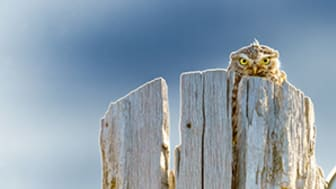 © Dan Gerard, United Kingdom, entry, Open competition, Natural World & Wildlife, 2021 Sony World Photography Awards