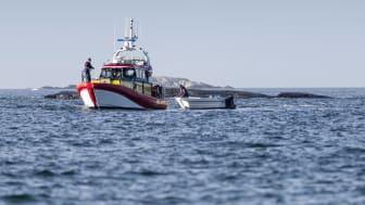 Sommaren har varit intensiv för Sveriges frivilliga sjöräddare. Uppdragen ökade med 54 procent.