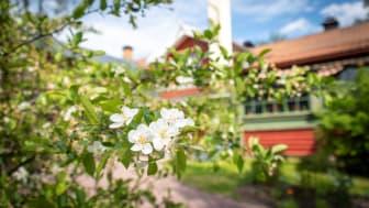 Swedish Workshop skulle ha genomförts i Falun i april, men flyttas nu fram till maj 2022. Foto: Visit Dalarna.