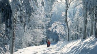 Feldberg im Taunus: Spaziergänger im Schnee © DZT e.V. F: Foto-Design Ernst Wrba