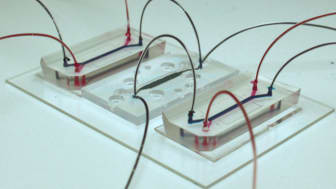 Chipen till vänster och höger är de som representerar blodhjärnbarriären. I mitten syns hjärnchipet. De blå vätskorna visar artificiell ryggmägsvätska och de röda visar artificiellt blod. I varje chip är den färgade kanalen cirka 2 cm lång.