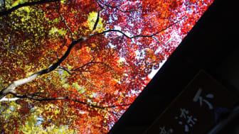 Kawagoe -Fall leaves at Nakain
