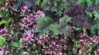 Förutom prydnadsgräs, mörkbladiga växter och blommor i rosa och rödviolett är bland annat perenner som går i silvriga, ljusgula och blåvioletta toner givna som sällskapsväxter.