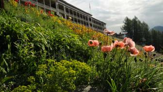Artenvielfalt, Botanischer Garten Schatzalp, Davos