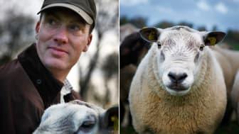 Tomas Olsson från Norrby gård är först ut att sköta Svenskt kötts Instagramkonto
