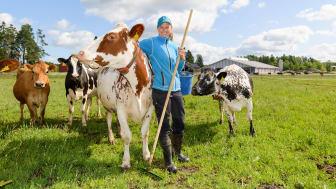 Hällforsin tilan maidontuottaja Crista Hällfors