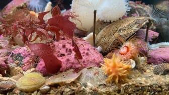 Biologisk mångfald – temat för Västerhavsveckan 2020