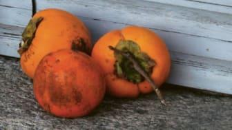 Fabio Andina - Tage mit Felice