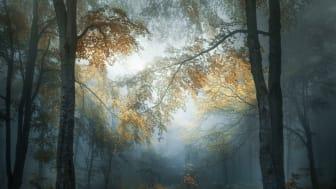 Veselin Atanasov, Bulgaria, Shortlist, Open, Landscape & Nature (2018 Open competition)