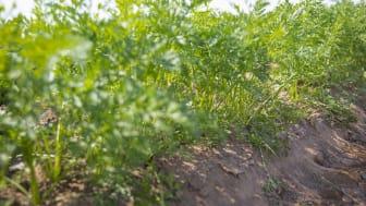 Tjälen och kylan skapar bra förutsättningar för jorden och kommande odling och säsong.