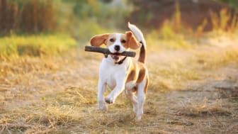 Gå en hundpromenad och rädda hjärtat!