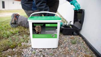 Selontra från BASF är ett nytt, effektivt medel som snabbt kan bekämpa alla råttor och möss – även de som är resistenta mot antikoagulerande medel.