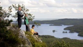 Ärtknubben Dalarna Foto Per Eriksson