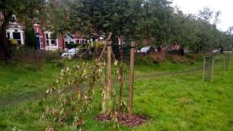 Anger as tree vandals strike again