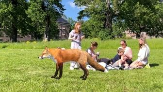 Mysteriet i parken - Picknick