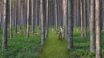 Tyréns designar naturkyrkogård i Norrbotten för vintermörker