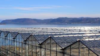 Grønt veksthus-samarbeid bærer frukter