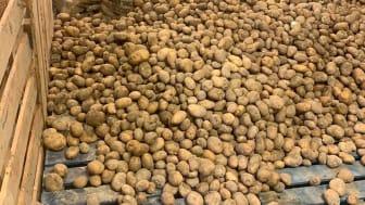 Lager med potatis