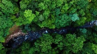 Schneider Electric presenterar åtgärdsprogram för att skydda den biologiska mångfalden