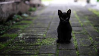 Mehr Kätzchen als Tiger – genauso harmlos ist laut Statistiken auch ein Freitag, der 13.