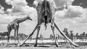 © Marcus Westberg, Sweden, Shortlist, Open competition, Natural World & Wildlife, 2020 Sony World Photography Awards