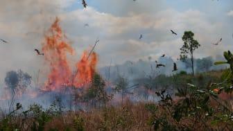 Skovbrande i Cerradoen udgør en stor trussel mod unikt plante- og dyreliv. Foto: Arkiv
