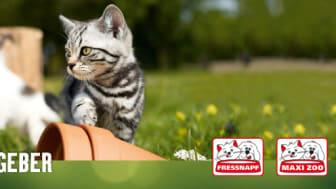 Fressnapf-Tierratgeber 07/2019: Internationaler Tag der Katze - Wie sie richtig und ausreichend trinkt.