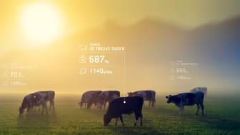 Västsvenska Hencol har utvecklat världens första digitala beslutsstödsystem som genererar information om djurens tillväxt och hälsa i realtid.