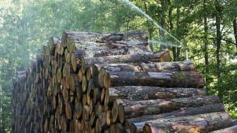 Auktorisationen för golvleverantörer har krav på social och miljömässig hållbarhet i hela kedjan
