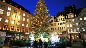 """Weihnachtsbaum mit Lichtillumination """"Chor der Engel"""" auf dem Markt - Foto: Andreas Schmidt"""