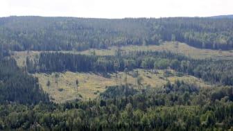 Tolv forskningsprojekt har beviljats inom Tandem Forest Values-programmet. Foto: Ylva Nordin.
