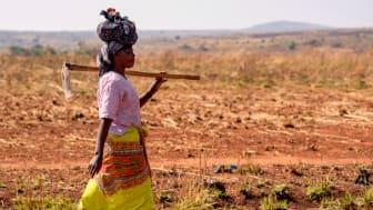 I anslutning till årets stämma skänker KfS 83.000 kr till We Effects viktiga arbete för att utrota fattigdom.