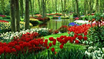Trädgårdsmässa i Nordstan 19-28 mars