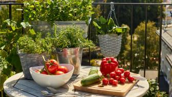 Tomatglädje