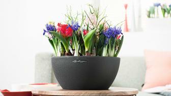 Frühlingserwachen - mit den Pflanzgefäßen von LECHUZA
