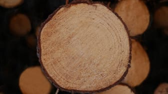 Calejo bygger digital tvilling av SCA:s skogliga leveranskedja