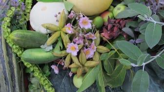 Höstfest med tropisk provsmakning och urban biodling i Bergianska trädgården