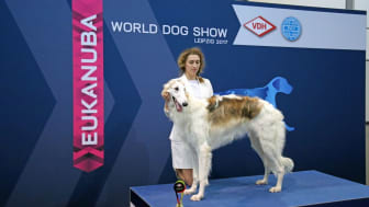 World Dog Show 2017 - German Junior Winner