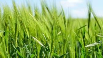 Växtkammaren bidrar till betydligt mer effektiv och hållbar odling av foder och grödor