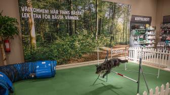 Dogmans butiksnät i Sverige växer – Förvärvar Växjöbaserad butik