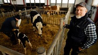 Anders Nilsson vid en av kalvningsboxarna med nyfödd kalv