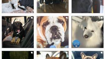 Dacia tar hjälp av hundinfluencers för att fler ska resa säkert med sina hundar