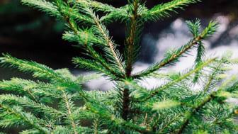 Produktkategoriregler för skogsråvara publicerade