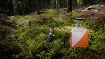 Stort intresse för O-Ringen Kolmården 2019 i Norrköping - redan 8600 anmälda!