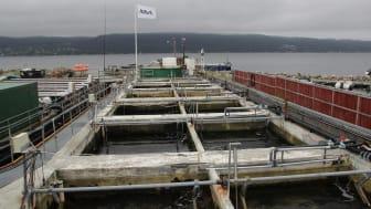 NIVAs tidevannsbassenger på Solbergstrand2