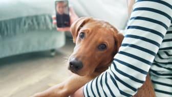Telemedizin für Vierbeiner rund um die Uhr gibt es ab sofort in der Barmenia Tierkrankenversicherung.