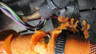elbil - mus har gnaget på en høytspentkabel